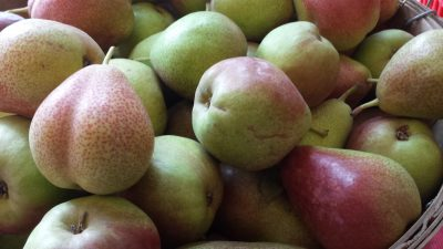Fall Nutrition with Pears